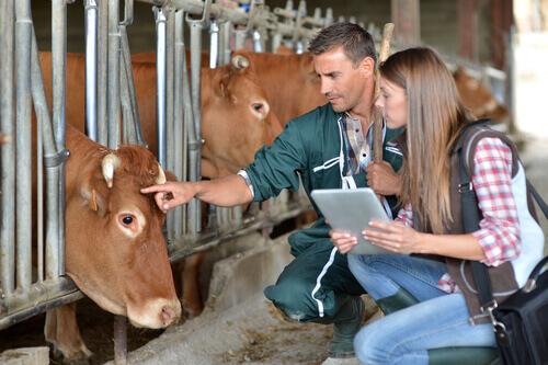 O que os veterinários fazem?