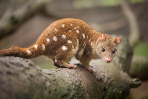 A fauna da Austrália: conheça os animais endêmicos do país