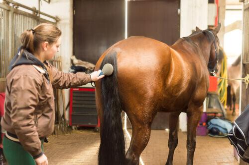 escovação do cavalo