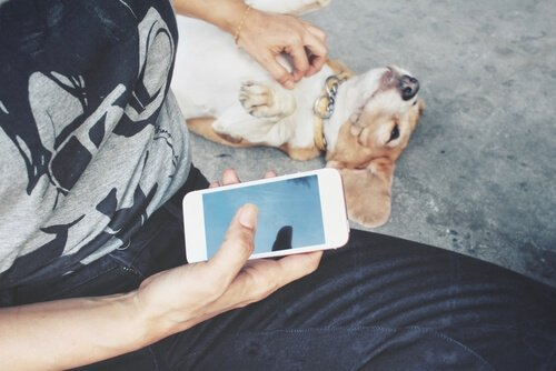 redes sociais para animais