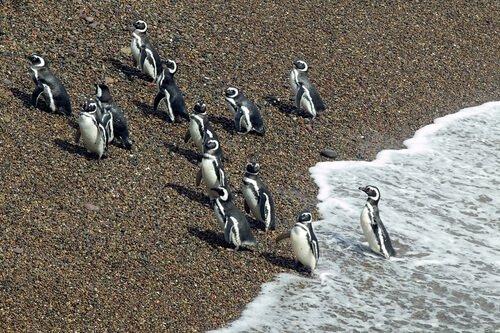 Reservas da fauna sul-americana: conheça 5 delas aqui!