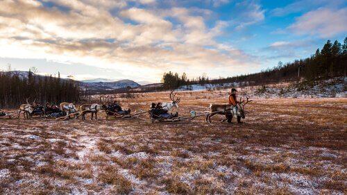 Povo Sami: os últimos pastores de renas