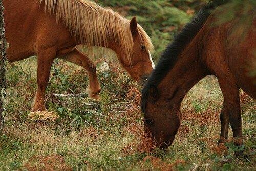 Forragem para cavalos