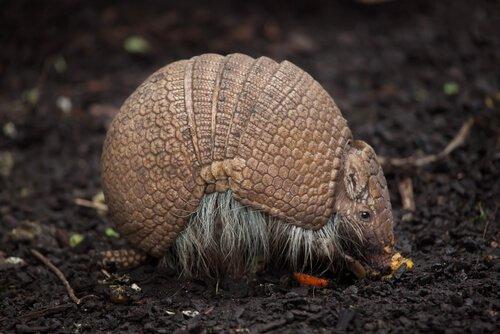 A incrível fauna brasileira: venha conhecê-la!
