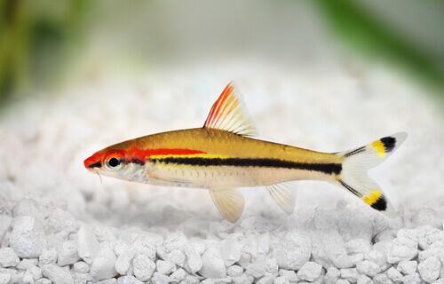 5 tipos de barbatanas dos peixes