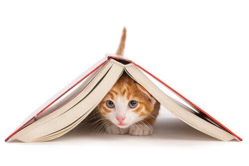 É realmente possível treinar um gato?