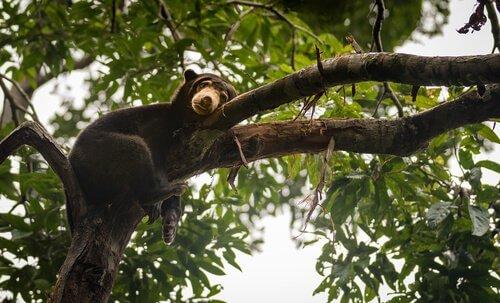 Urso em árvore