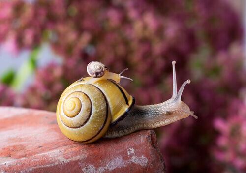 A vida do caracol: com a casa nas costas
