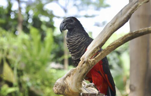 5 espécies de papagaios: venha conhecê-los!