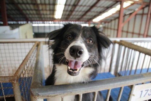 Adotar um cachorro abandonado: algumas considerações