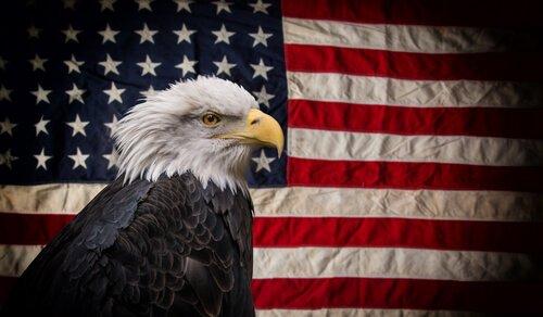 5 aves nacionais dos Estados Unidos