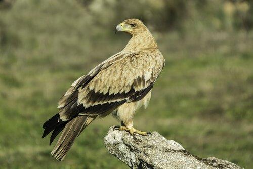 aves nacionais da Europa