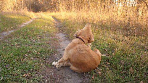 Alergias caninas: causas e sintomas
