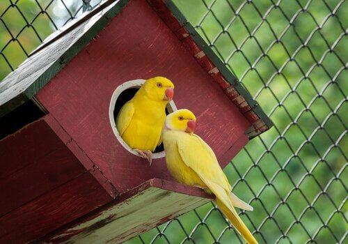 5 animais de cor amarela