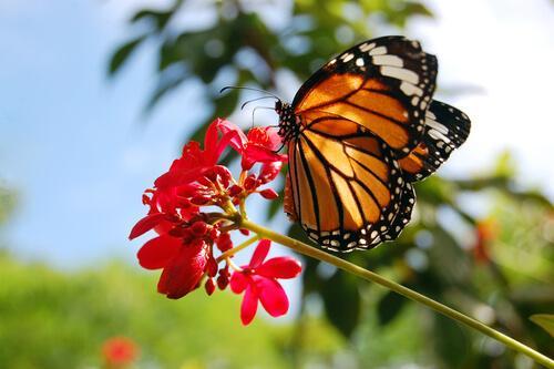 5 animais laranja: conheça estas lindas espécies