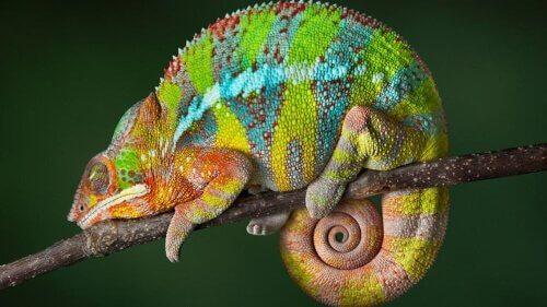 Animais que podem mudar de cor