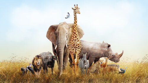 Animais que podem ser vistos na África
