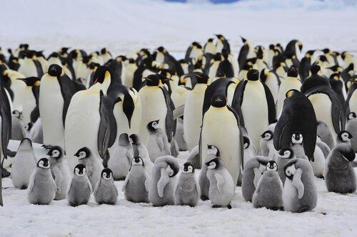 aves que formam colônias: pinguins