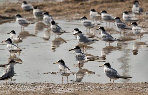 algumas aves que formam colônias
