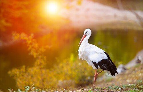 aves nacionais europeias