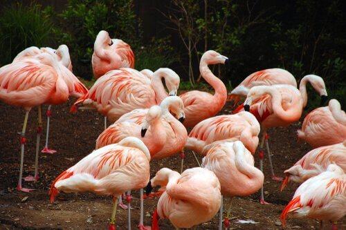 5 aves que formam colônias: conheça-as aqui!
