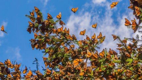 como atrair borboletas para o jardim
