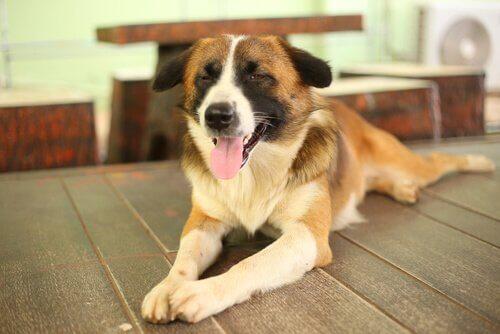 Cães cegos: um treinamento que estimula seus sentidos