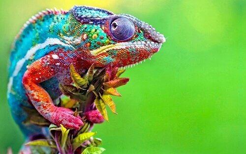 como funciona a camuflagem do camaleão?