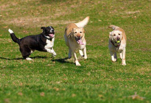 Cachorros correndo no parque