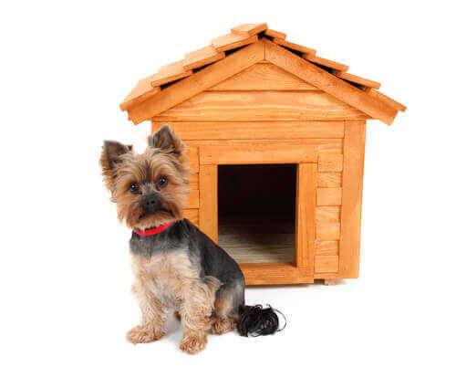 Casa de madeira para cachorro
