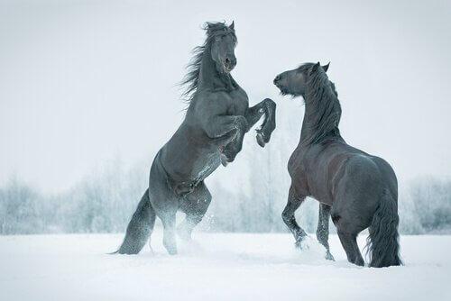 Encontraram um cavalo pré-histórico congelado