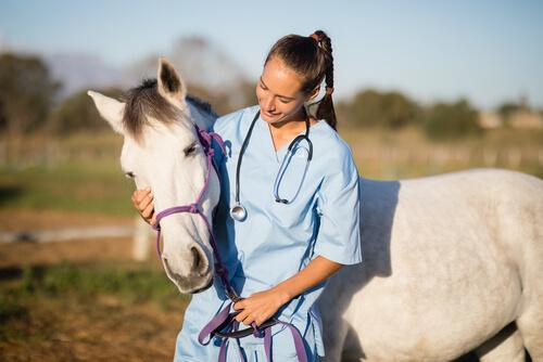 Veterinária com cavalo