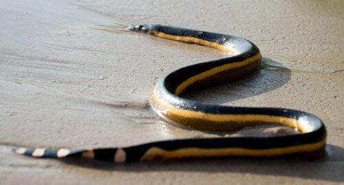 5 cobras marinhas