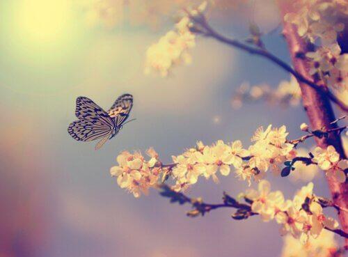 Como atrair borboletas para o jardim?