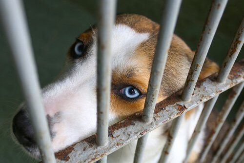 adotar um cachorro abandonado