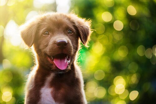 Omg_puppies