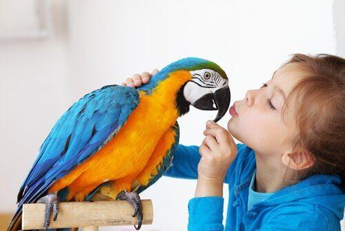 Menina beijando um papagaio