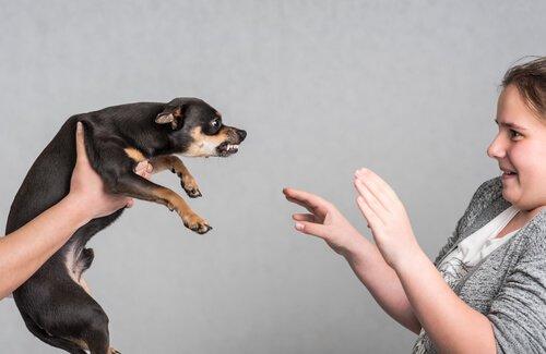 Menina se defendendo de cão agressivo