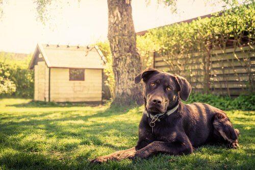 14 dicas para construir uma casa para cães