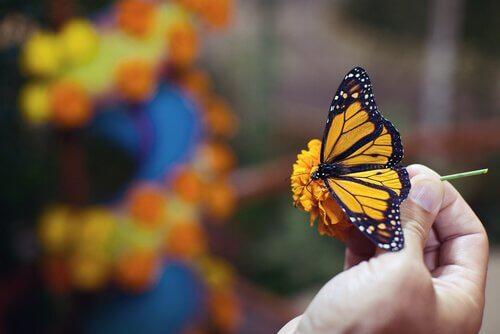 borboleta pousada sobre uma flor