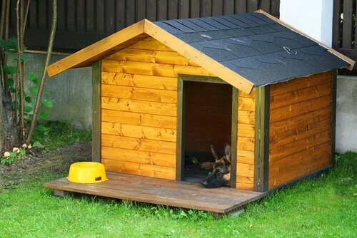 casa para cães