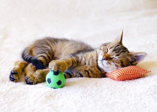 Gatinho dormindo, com bola e travesseiro