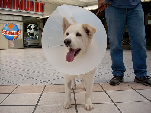 Dermatite acral em cães causada por lambidas