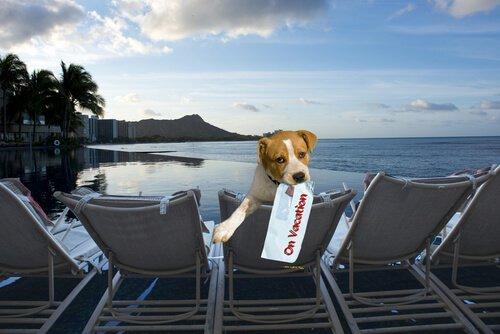 Cachorro hospedado em hotel pet friendly