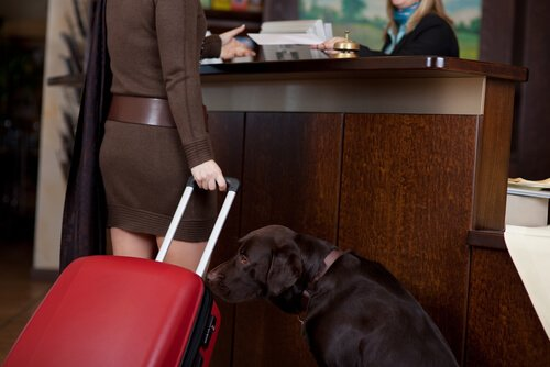 Hotéis e resorts em que animais de estimação são bem-vindos
