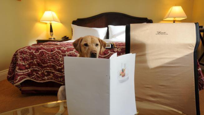 Hotéis que aceitam animais de estimação