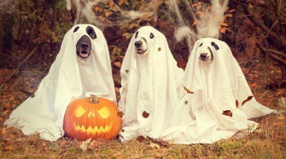 6 doenças caninas de outono
