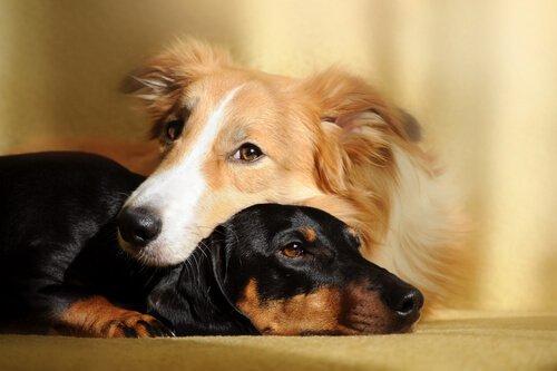 Benefícios de ter dois cães em casa