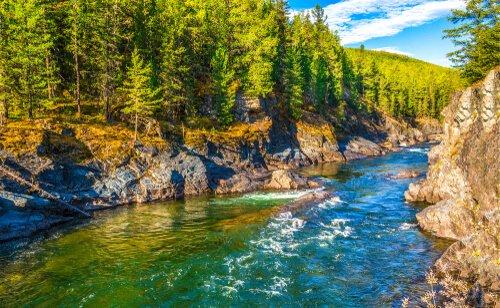 rio em floresta temperada