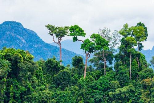 Os 5 principais ecossistemas do mundo